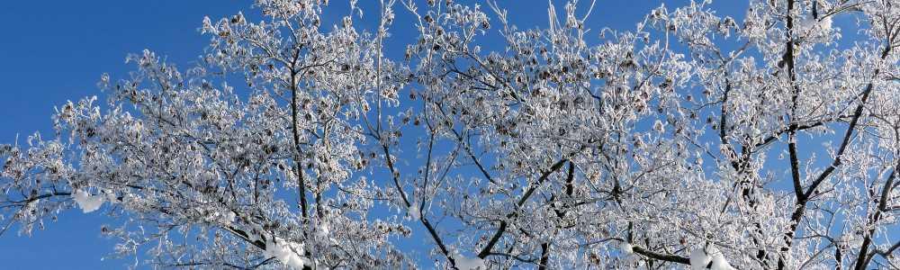 slider_gsm_aussen_winterbaum